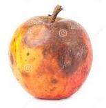rotten-apple-2.jpg