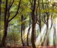 sunlight thru trees